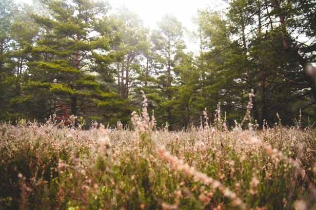 nature-forest-fog-grass.jpg